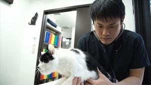 猫だけを診察し続ける獣医師・服部幸の半年間に密着