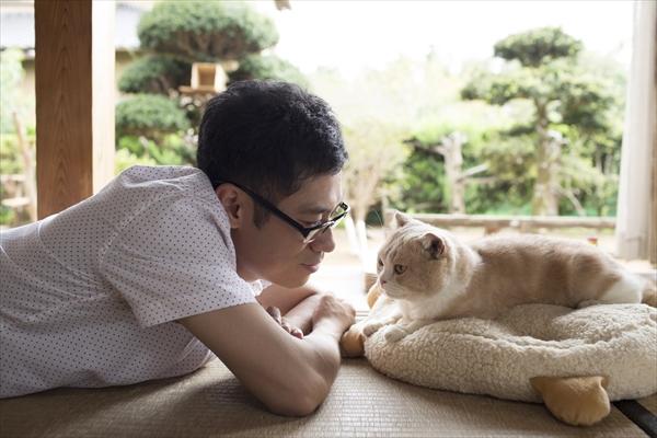 猫まみれ!人気アプリ「ねこあつめ」伊藤淳史主演で実写化