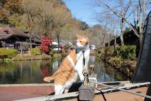 「猫忍 猫が見るDVD 父上の江戸ネコ歩き」
