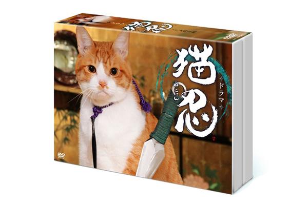 大野拓朗主演の癒やし活劇!ドラマ『猫忍』DVD-BOX 5・10発売