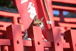 映画「猫忍」©2017「猫忍」製作委員会