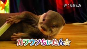 『カワウソちぃたん☆が行く ホントの日本』