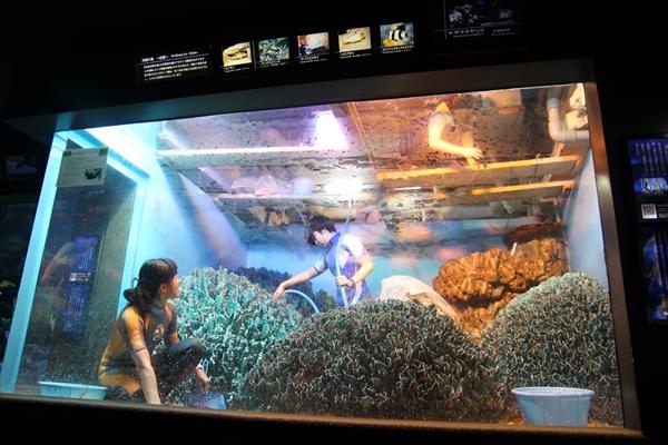 水槽の水ぜんぶ抜く!池袋・サンシャイン水族館で「水槽ピカピカ大作戦!」3月に実施