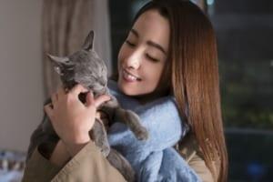 映画『猫は抱くもの』