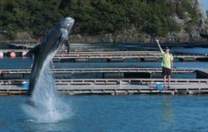 『ボクはボク、クジラはクジラで、泳いでいる。』