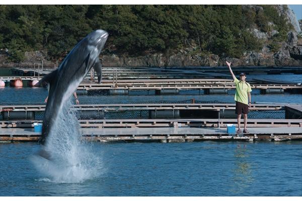 矢野聖人主演『ボクはボク、クジラはクジラで、泳いでいる。』特報映像&場面写真解禁