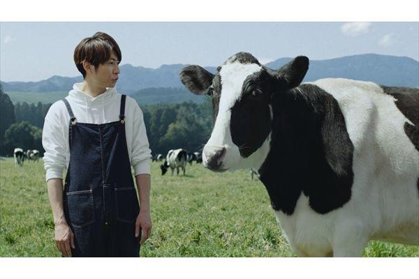 相葉雅紀が牛と掛け合い漫才!?「明治おいしい低脂肪乳」新CM4・2放送開始