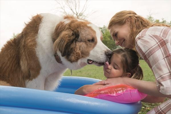 何度も生まれ変わる犬ベイリーの新たな旅が始まる!「僕のワンダフル・ジャーニー」予告第1弾解禁