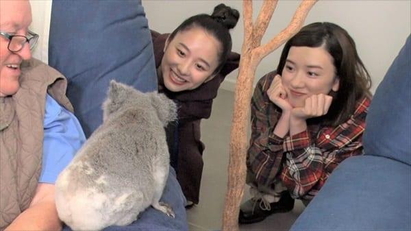 永野芽郁&堀田真由がコアラに大興奮!『坂上どうぶつ王国3時間SP』8・23放送