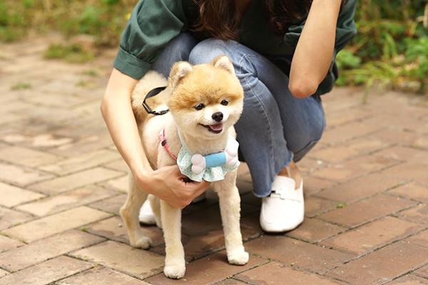 犬用音楽プレイヤー「PEPPI3」