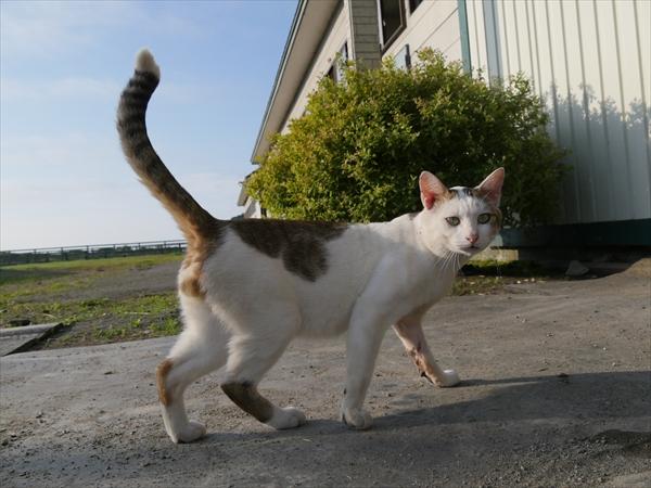 『旅猫ロマン』