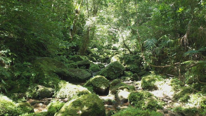 西表島の渓流
